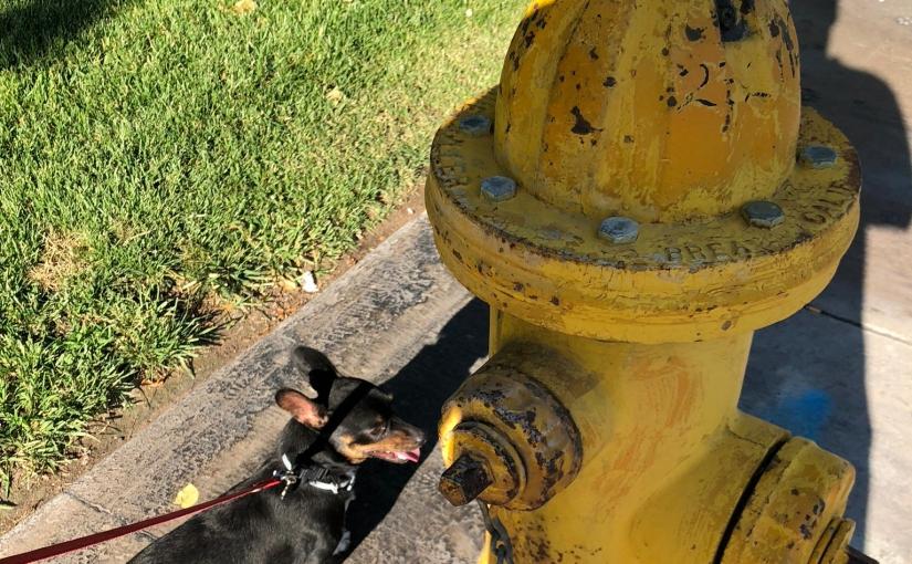 CHIWEENIE BLOGGER | WATCH DOG | ADVENTURES | DOG TRAINING | DOG CARE | PHOTOS