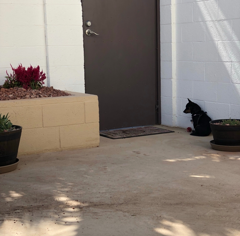 Photo of Chiweenie guardian at the courtyard door.